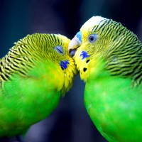 Пти́цы
